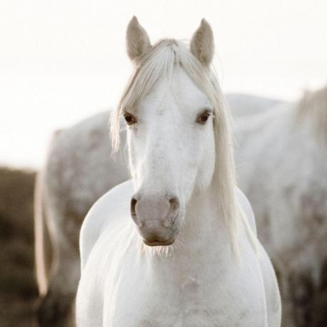 Carte Jorge Llovet - Horse - 14x14 cm
