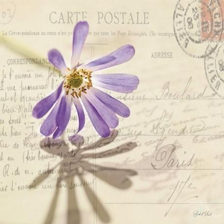Carte Deborah Schenck - Vintage Letter and Purple Daisy - 14x14 cm