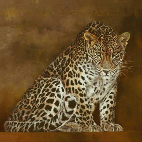 Carte Danielle Beck - Fatma, panthère de Perse - 14x14 cm