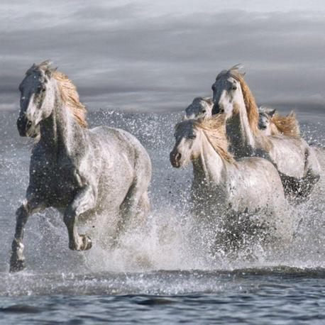 Carte Jorge Llovet - Horses Running at the Beach - 14x14 cm