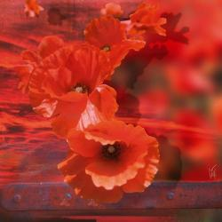 Carte Maïlo - Coquelicot rouge - 14x14 cm