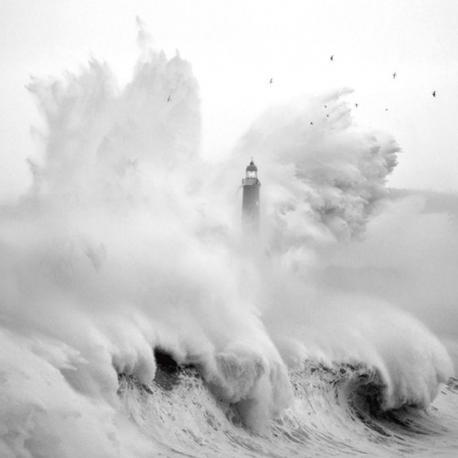 Carte Marina Cano - Bird in the storm - 14x14 cm