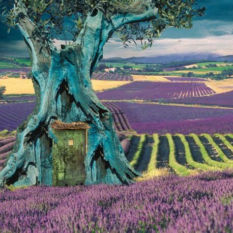 Carte Maïlo - L'olivier ou il fait bon vivre - 14x14 cm