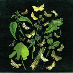 Carte Wild Apple Portfolio - Butterfly Bouquet on black III - 14x14 cm