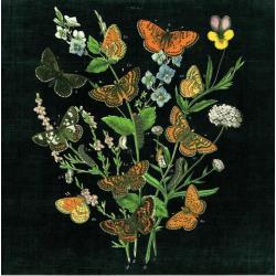 Carte Wild Apple Portfolio - Butterfly Bouquet on black I - 14x14 cm