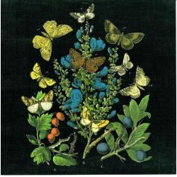 Carte Wild Apple Portfolio - Butterfly Bouquet on black II - 14x14 cm