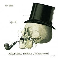 Carte Sue Schlabach - Dandy Bones II - 14x14 cm