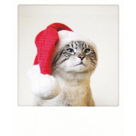 Carte Noël Pickmotion de @Poonchic - Christmas cat - 10.5x13 cm