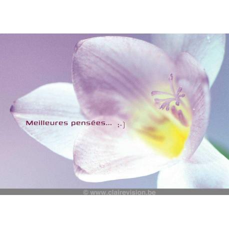 Carte Artistes Divers La collection souris à la vie - Fleur blanche, rose - pensées - 12x17 cm